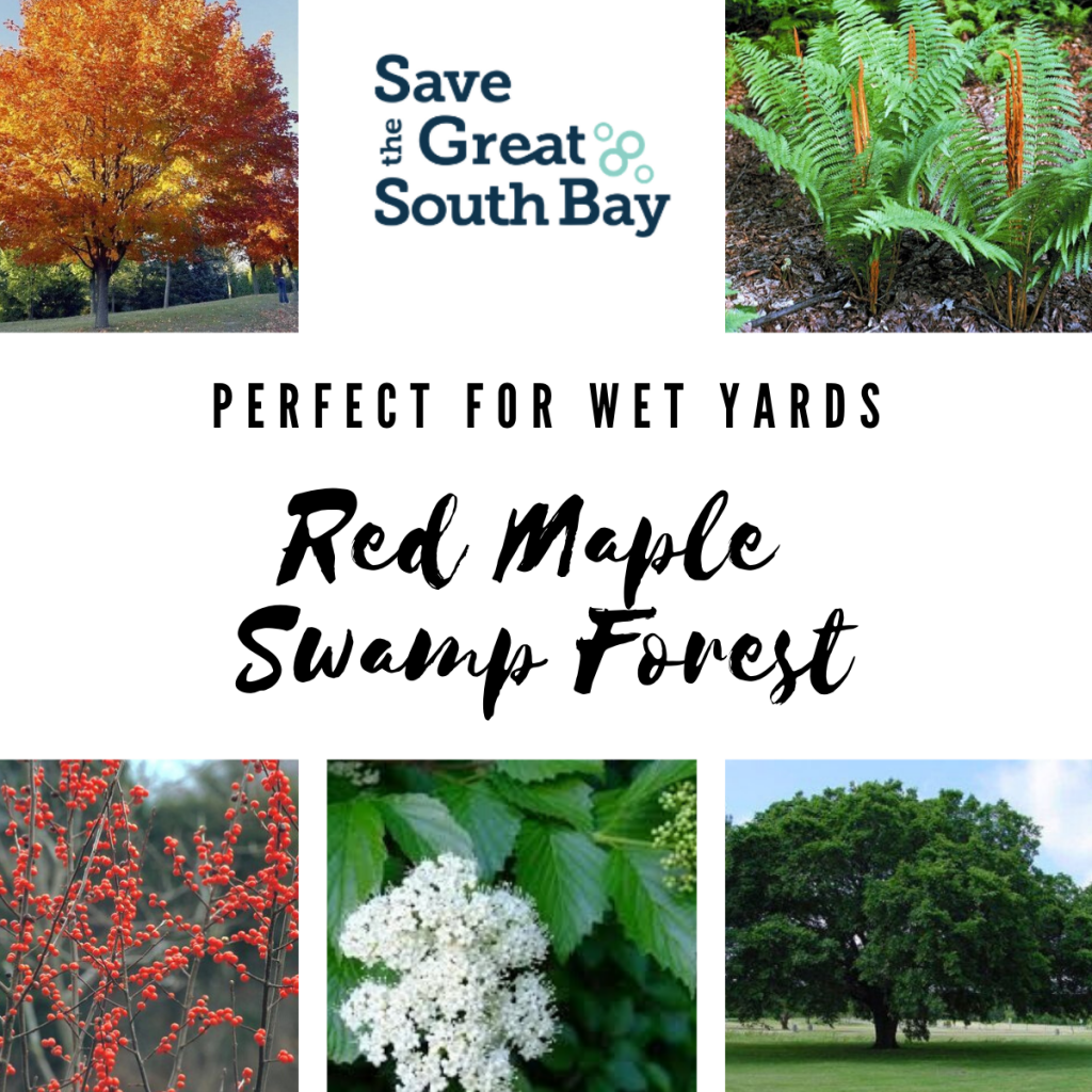 Red Maple Swamp Forest Bundle