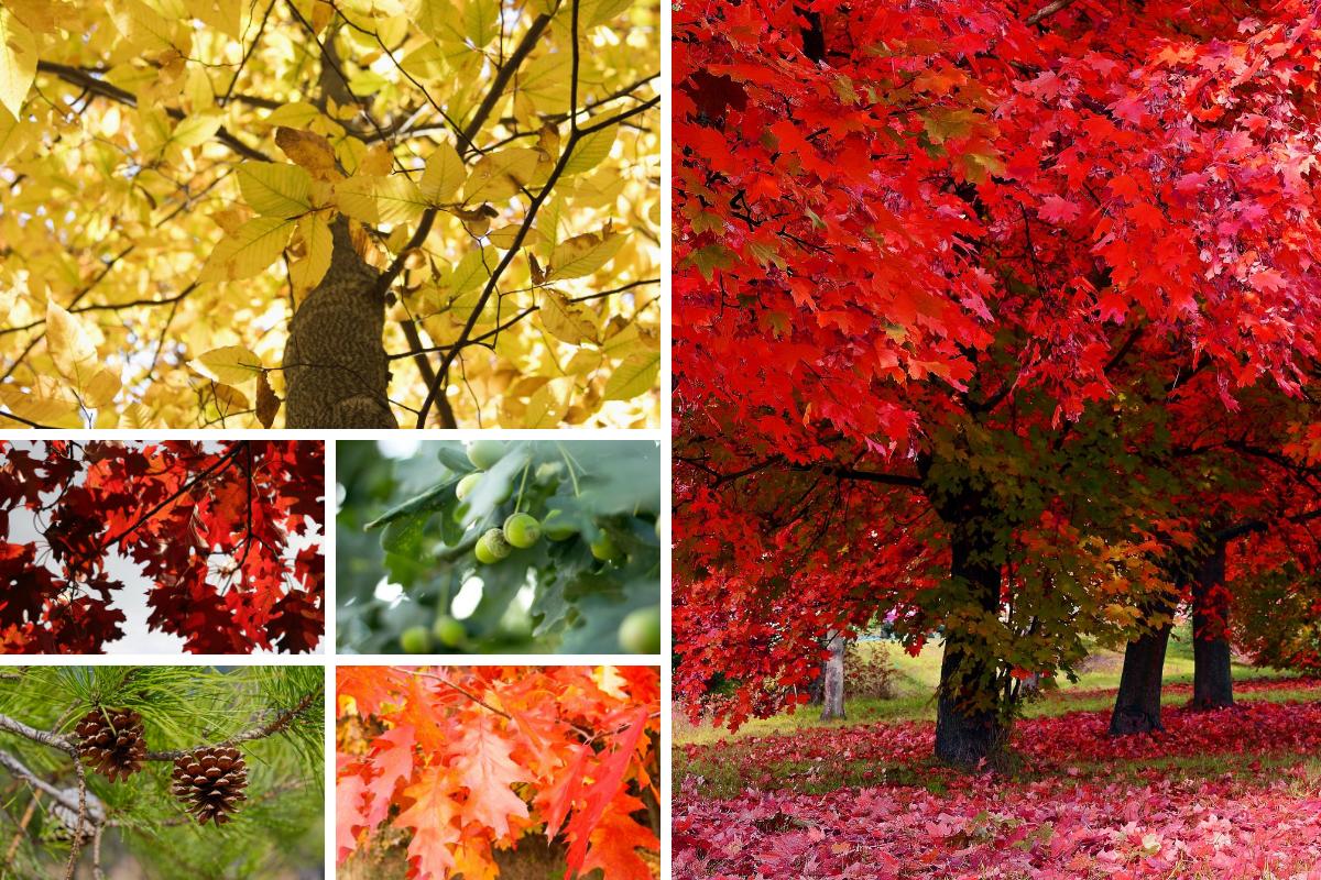 Top Five LI Native Trees