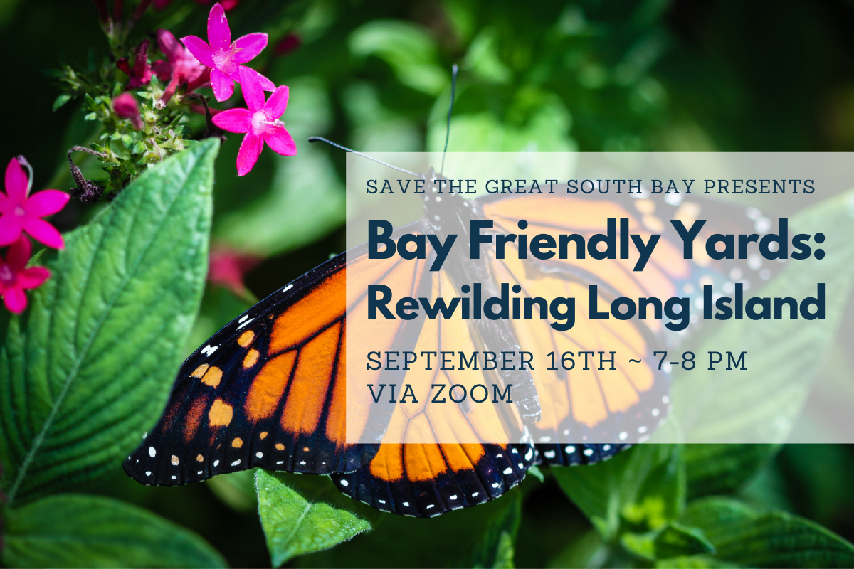 Bay Friendly Yards: Rewilding LI