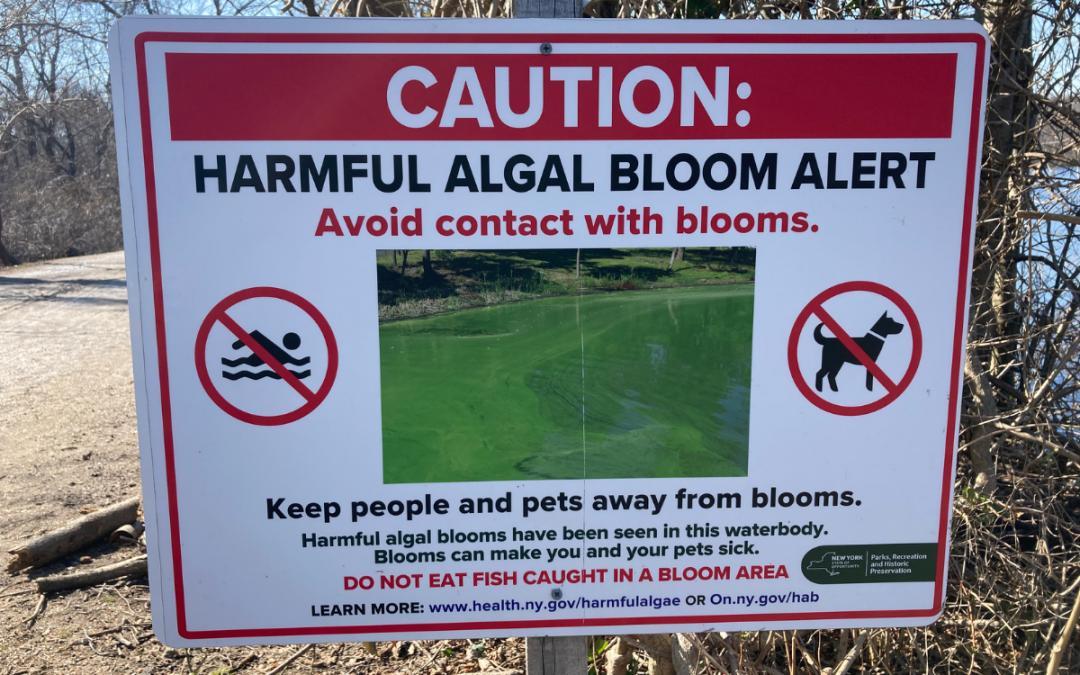 Harmful Algal Blooms (HABs) – Spot It – Avoid it – Report It!