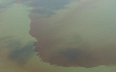 Mahogany Tide Returns to Great South Bay