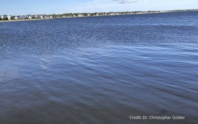Harmful Brown Tide Erupts Across the Great South Bay