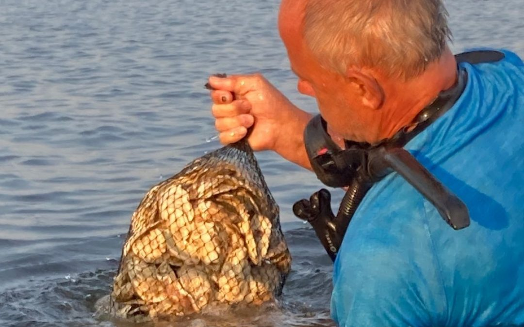 Great South Bay Oyster Project Plants 5,000 Oysters