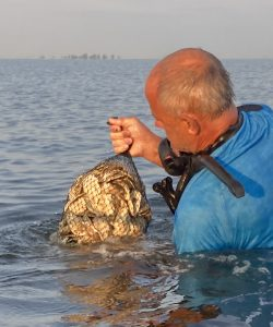 Great South Bay Oyster Project
