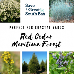 Red Cedar Maritime Forest
